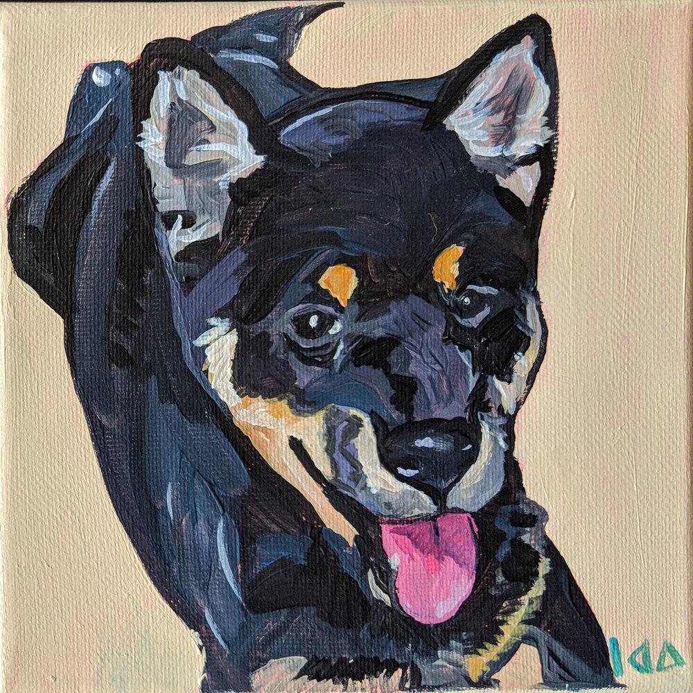 Dog817.jpg