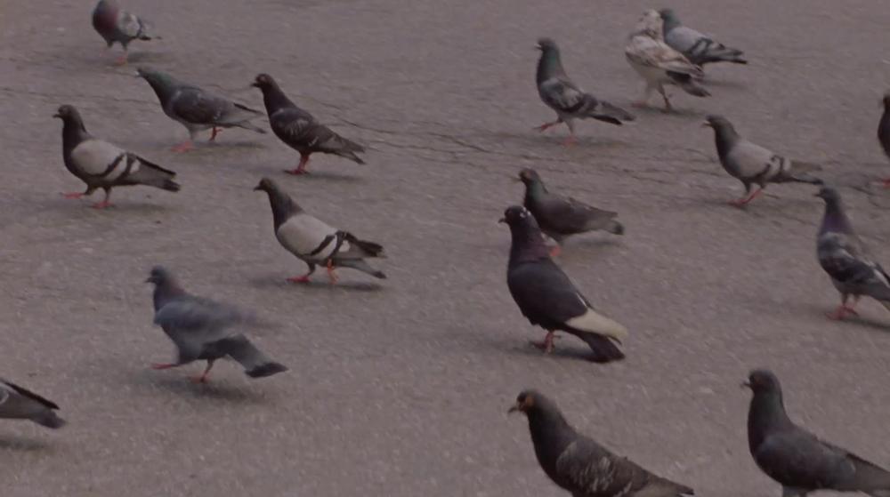 Anne Hollowday_Bird Watching_3.png