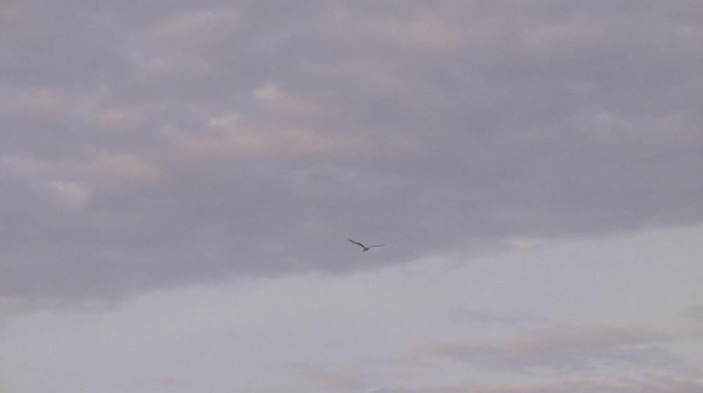 Anne Hollowday_Bird Watching_4.png