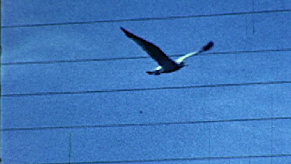 Anne Hollowday_Bird Watching_13.jpg