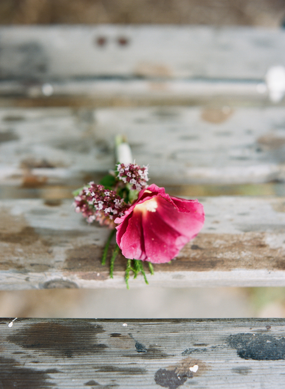 Andrea Naylor Photography Door County Blossoms Flower House Door County Wedding-26090008.jpg
