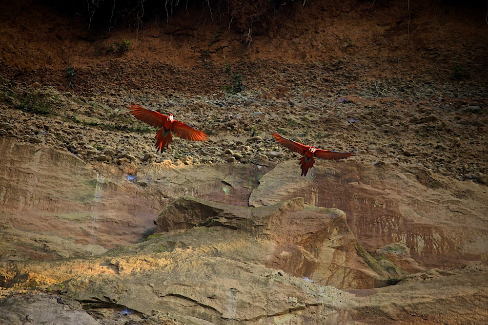 Macaws everywhere...