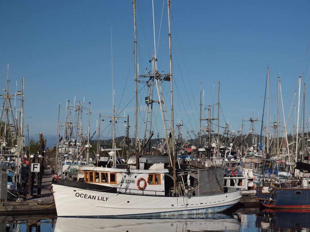 Maze of masts at the Quarterdeck