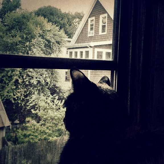 lola window_6.jpg