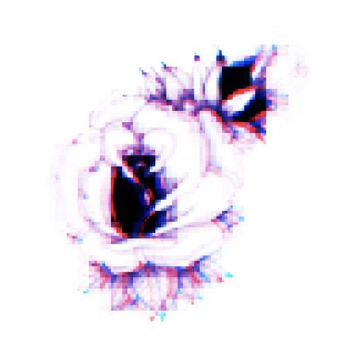 IMG_6247_z_.jpg