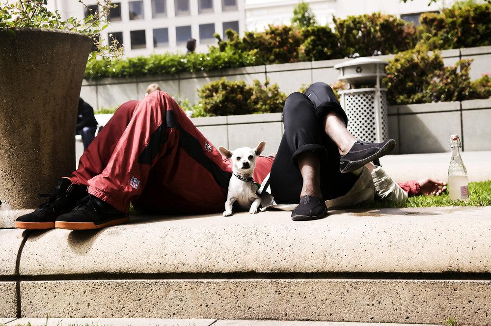 whitedogredpants_a.jpg