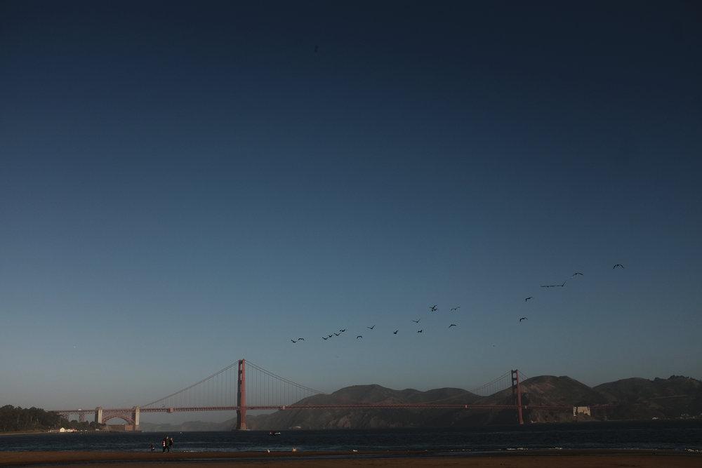 ggbridge_pelicans.jpg