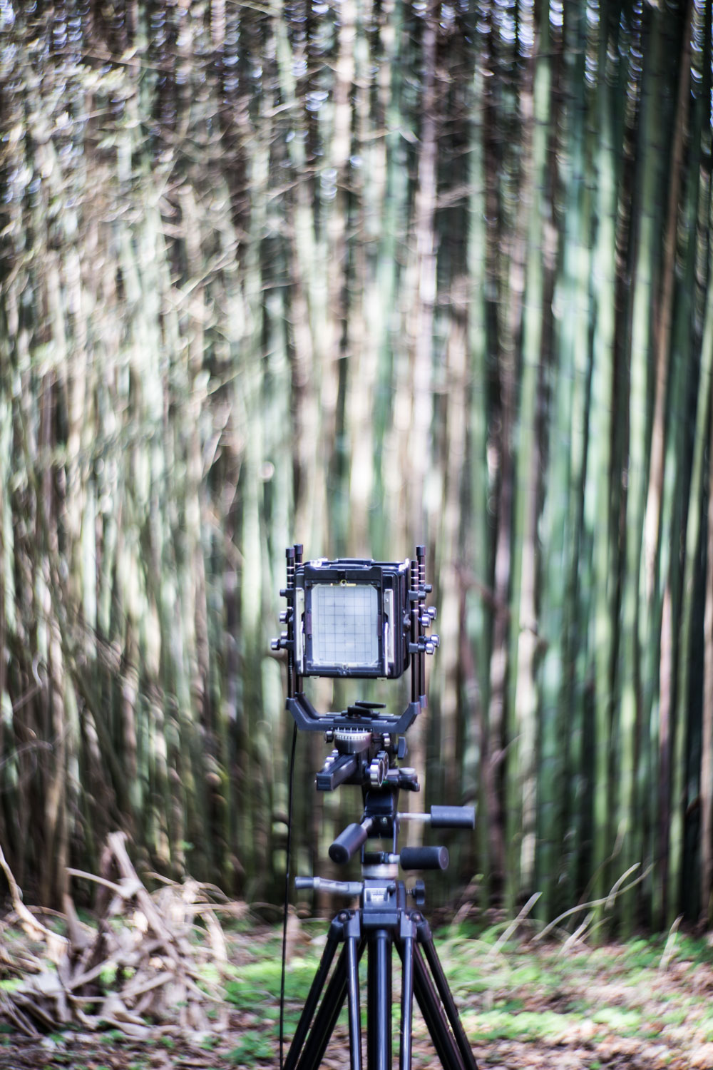 Zack's 4x5 film camera poises patiently at poet Darrell Bourque's bamboo backyard This project was helped by a grant from the New Orleans Jazz and Heritage Foundation Community Partnership Grant