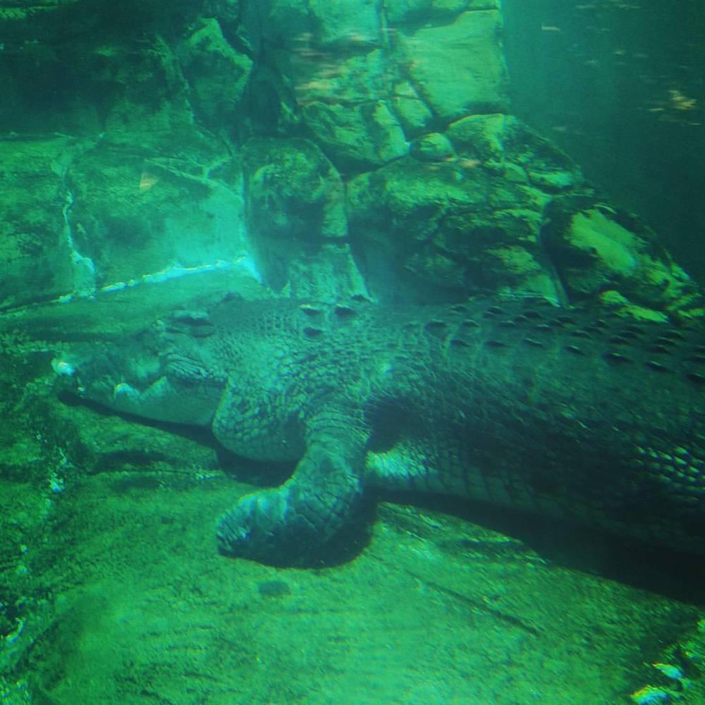 Croc Farm in Darwin