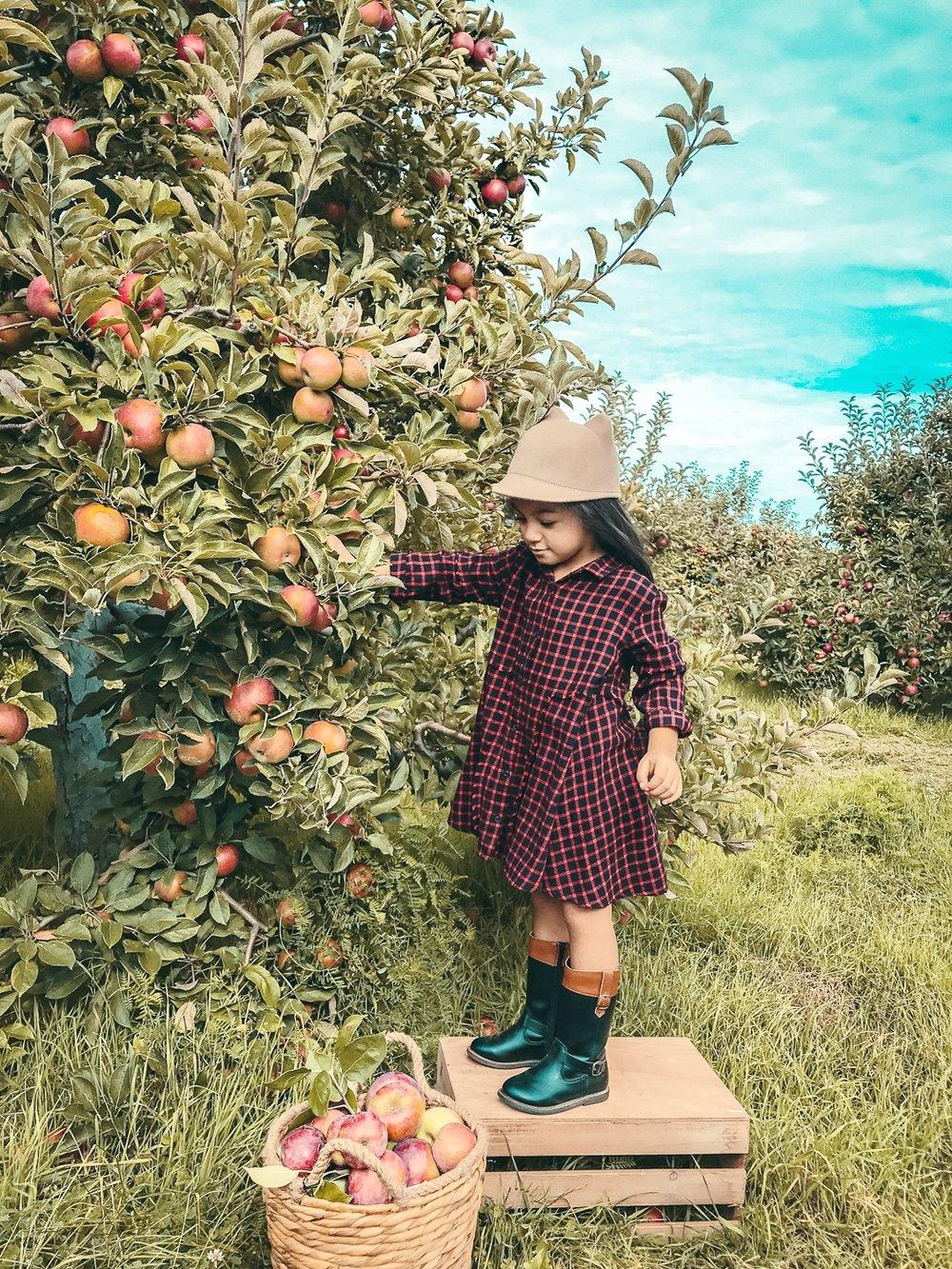 Chanell Apple Picking.jpg