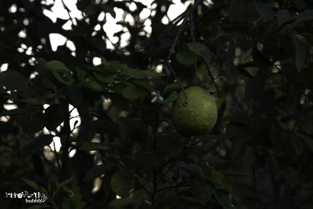 Lemon  A story-8.jpg