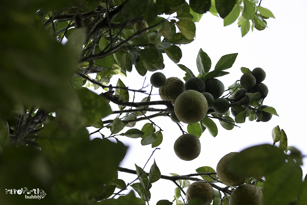 Lemon  A story-11.jpg