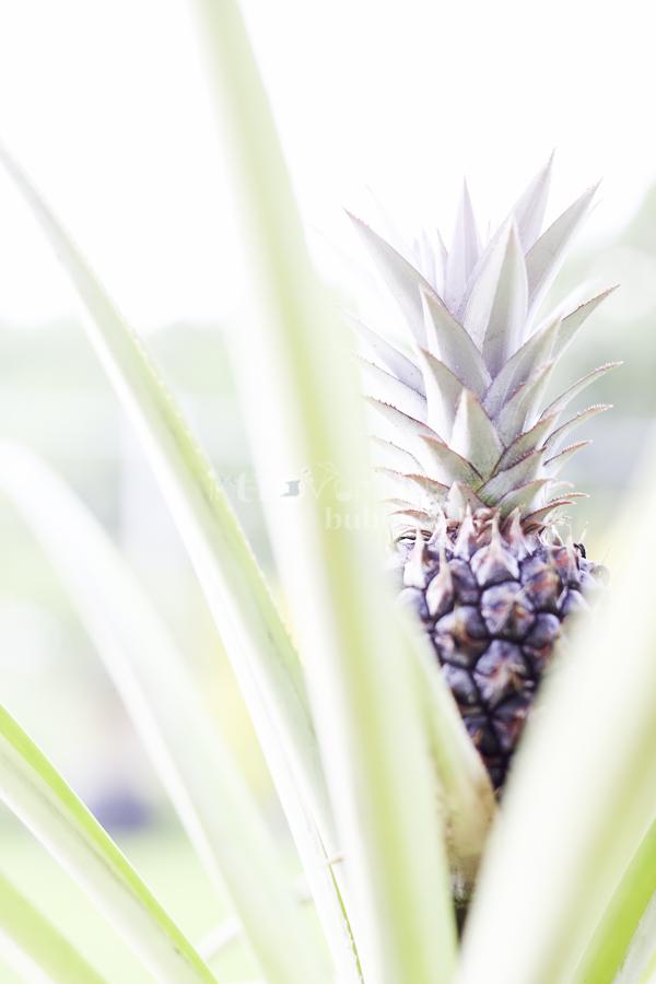 A pineapple story-6.jpg