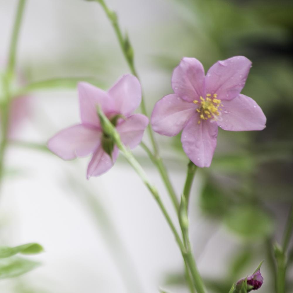 Flora and Fauna IntrovertlyBubbly Prints-Fields Wildflowers_PillowToteCurtainDuvetClock.jpg