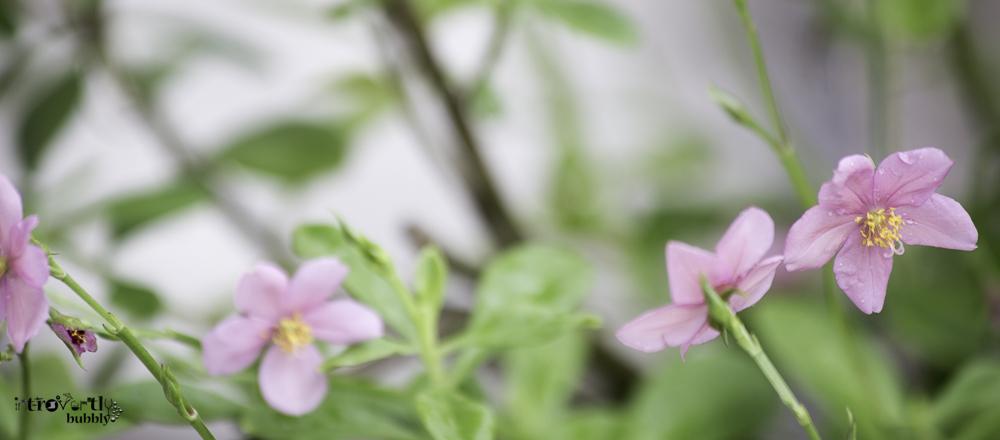 Healing in the Garden-21.jpg