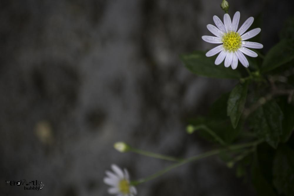 Healing in the Garden-18.jpg