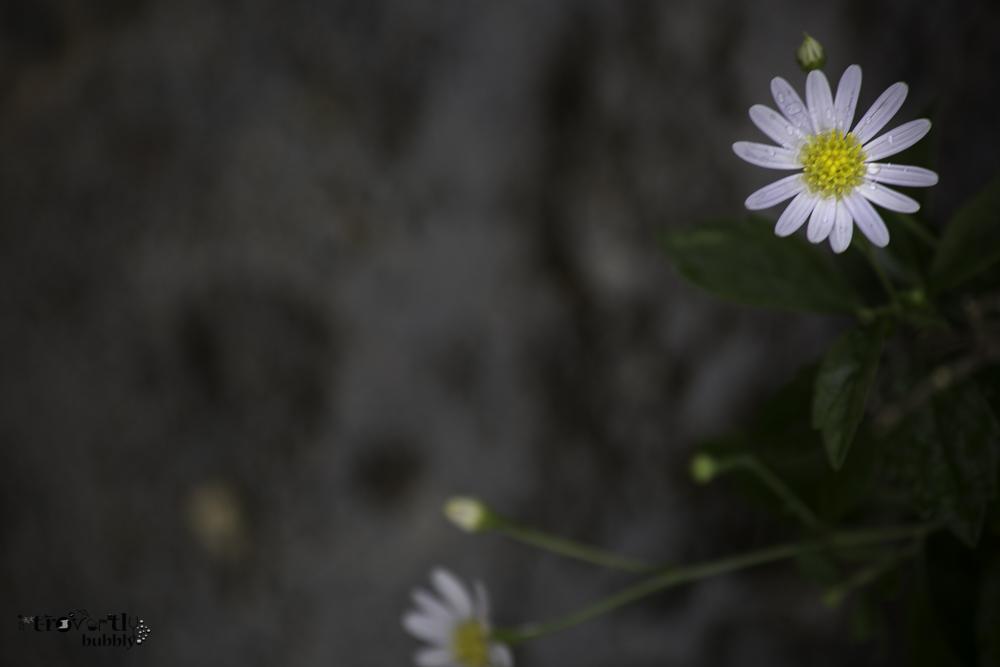 Healing in the Garden-19.jpg