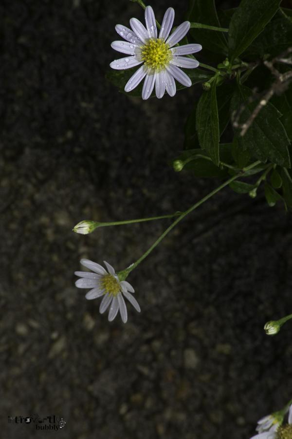 Healing in the Garden-17.jpg
