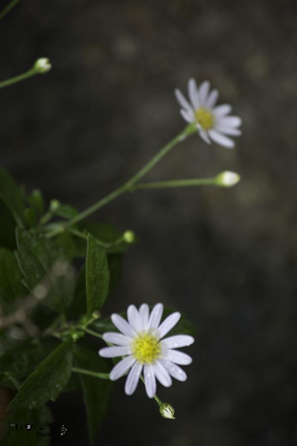 Healing in the Garden-16.jpg