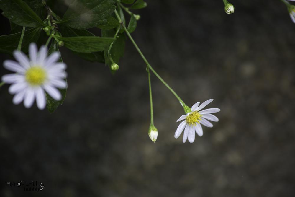Healing in the Garden-15.jpg