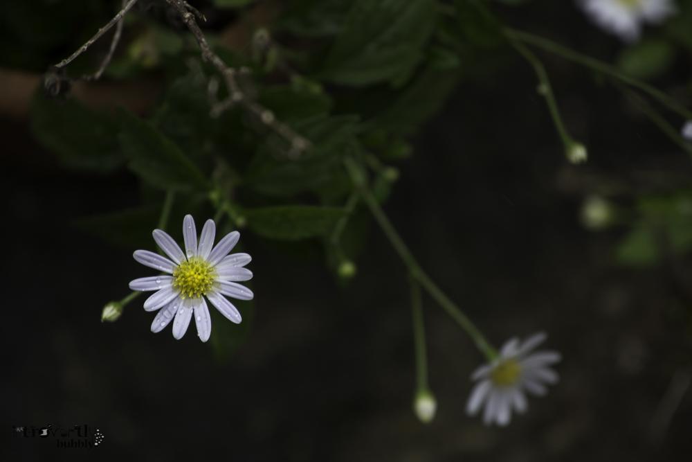 Healing in the Garden-13.jpg