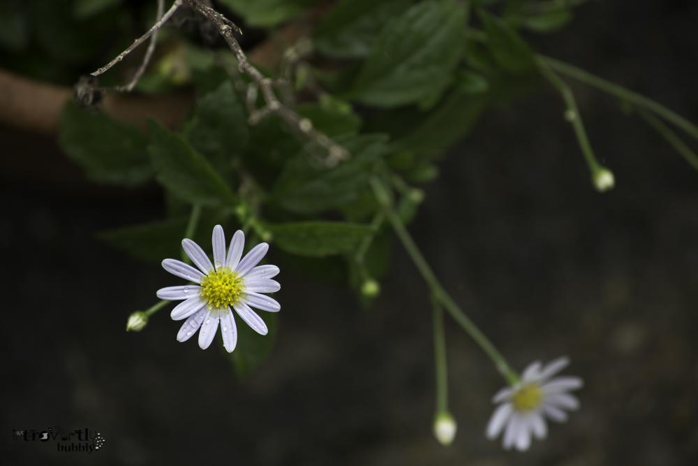 Healing in the Garden-12.jpg