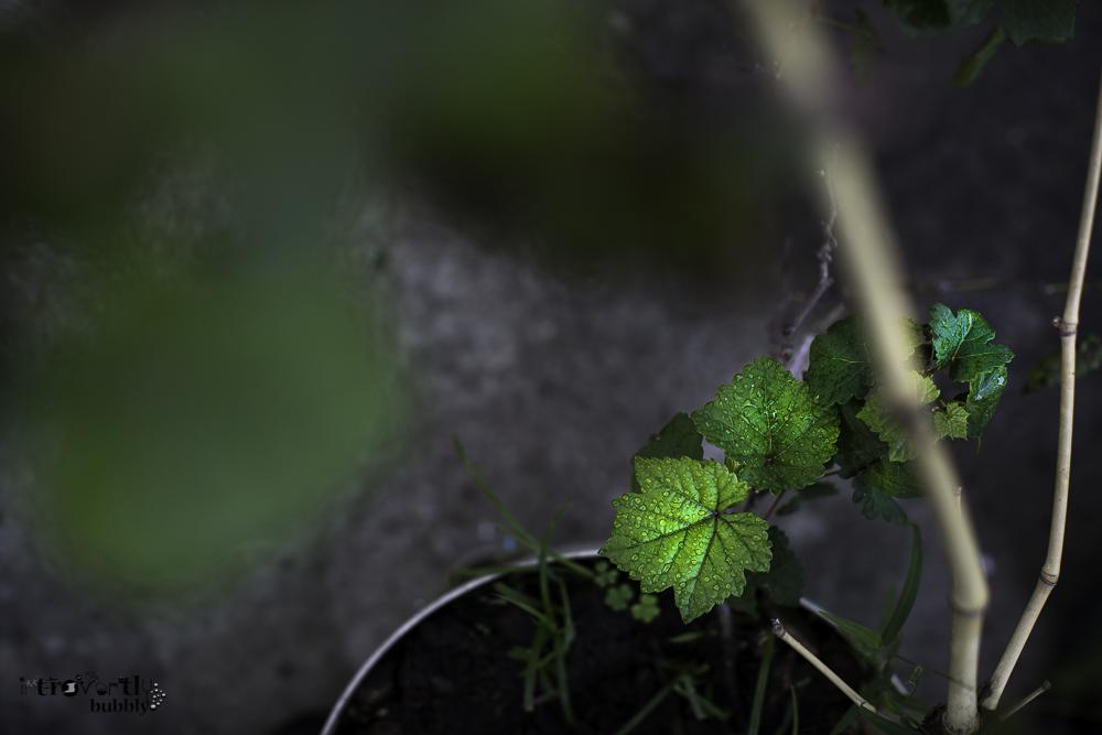Healing in the Garden-2.jpg