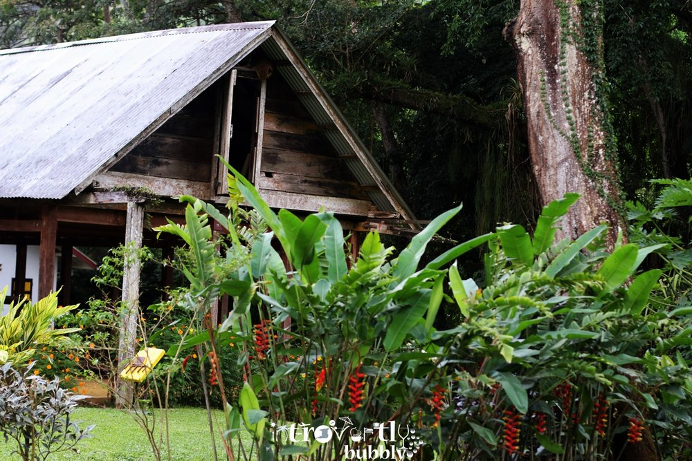 nature-and-outdoors--lopinot-main-house-trinidad-trinidad-and-tobago_16424593614_o.jpg