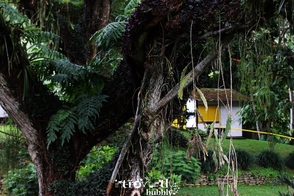 nature-and-outdoors--lopinot-main-house-trinidad-trinidad-and-tobago_16839633337_o.jpg