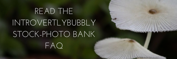 READ THE INTROVERTLYBUBBLY STOCK-PHOTO BANK FAQ