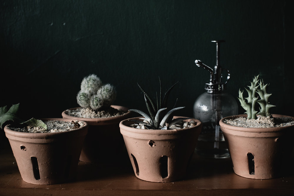 House Plants, Reportage-3.jpg