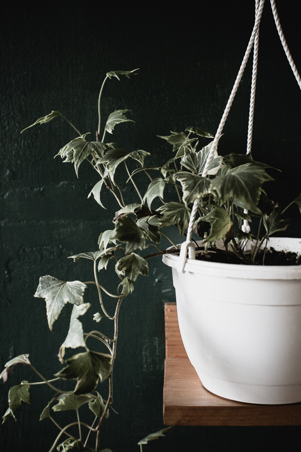 House Plants, Reportage-11.jpg