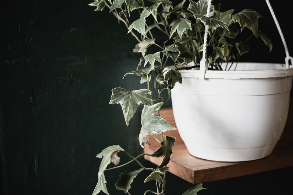 House Plants, Reportage-12.jpg