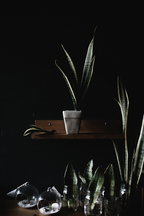 House Plants, Reportage-18.jpg