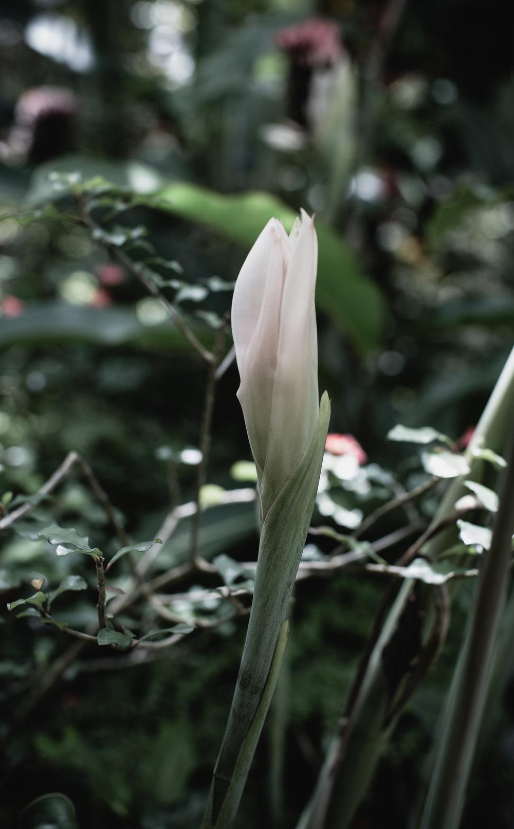 The Secret Garden-2.jpg