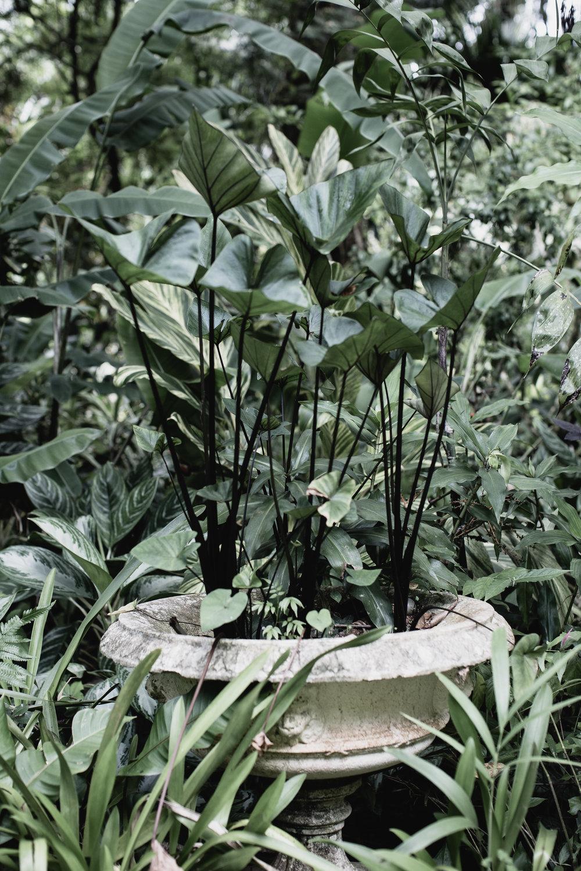 The Secret Garden-5.jpg