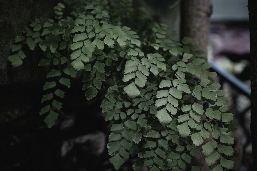 The Secret Garden-23.jpg