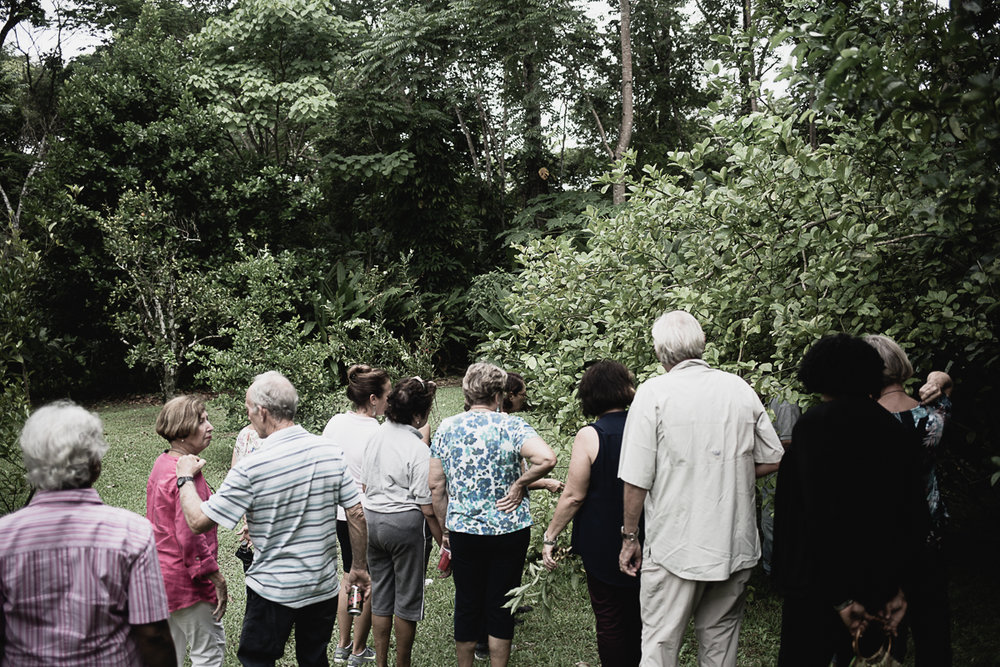 We walk and gather and talk about plant life and tropical gardens