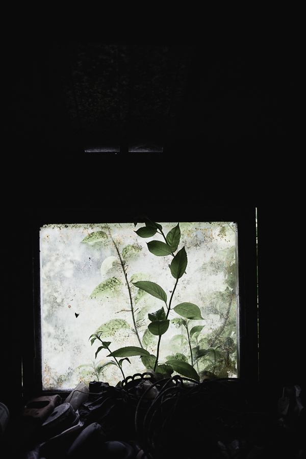 Copy of I love a old window overgrown with greens