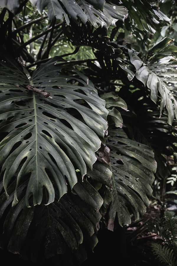 Lush in the tropics
