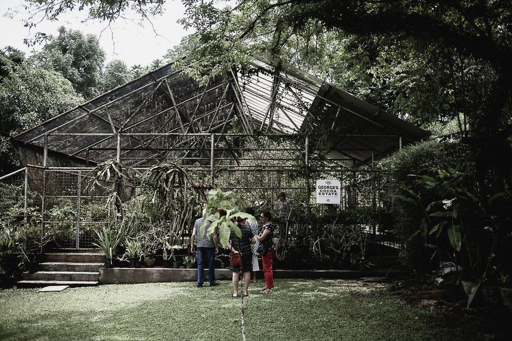 On George's Cocoa Estate