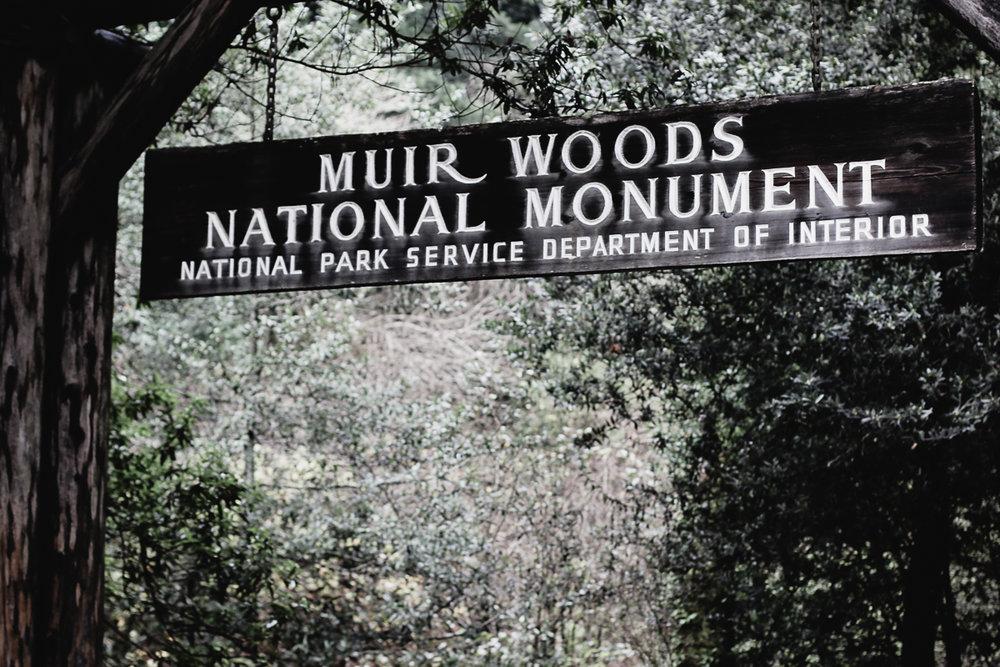 Muir Woods-58.jpg