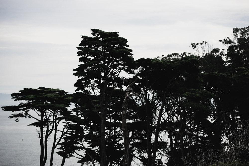 Muir Woods-15.jpg