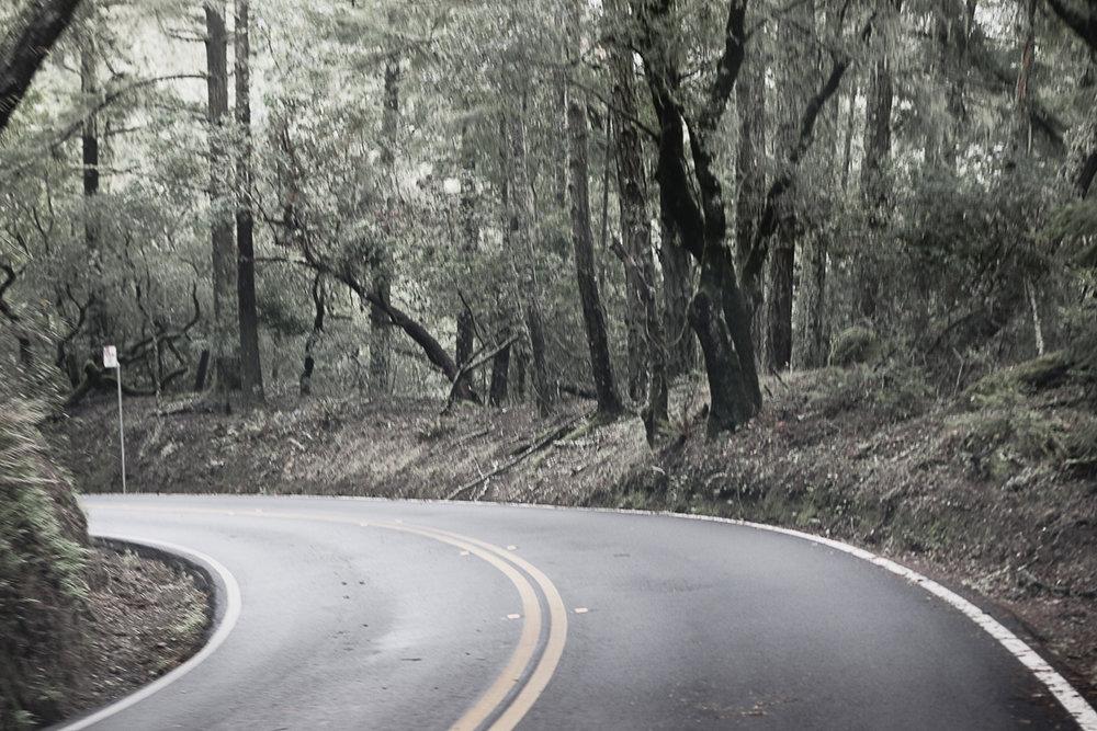 Muir Woods-41.jpg