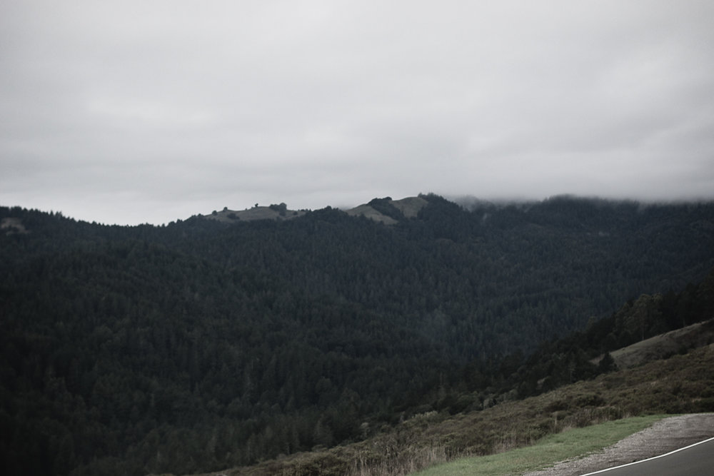 Muir Woods-30.jpg
