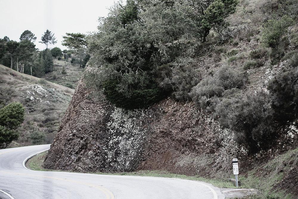 Muir Woods-35.jpg