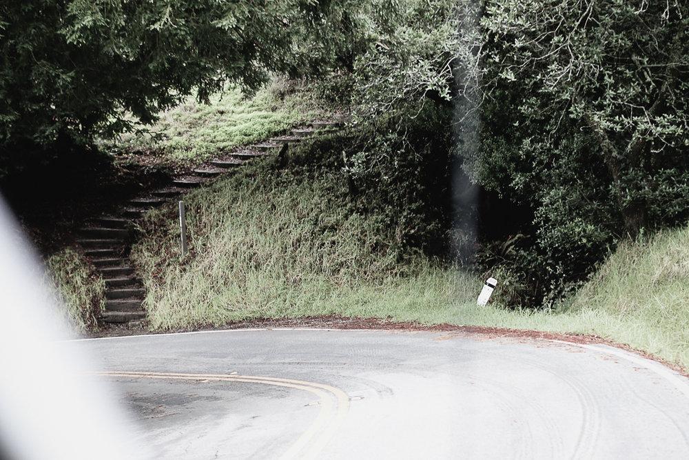 Muir Woods-37.jpg