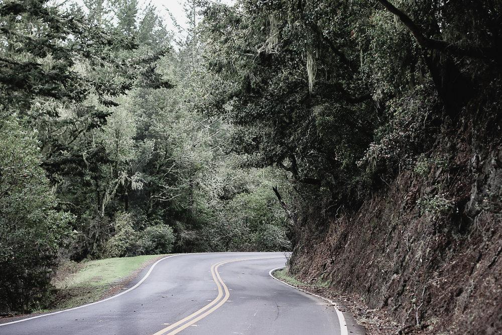 Muir Woods-39.jpg