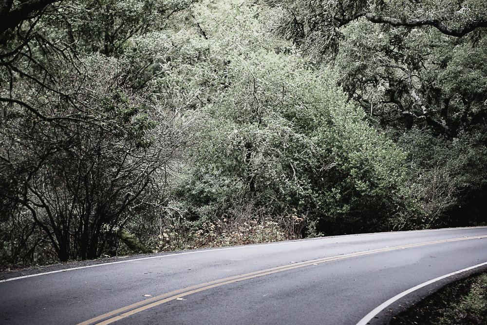 Muir Woods-40.jpg