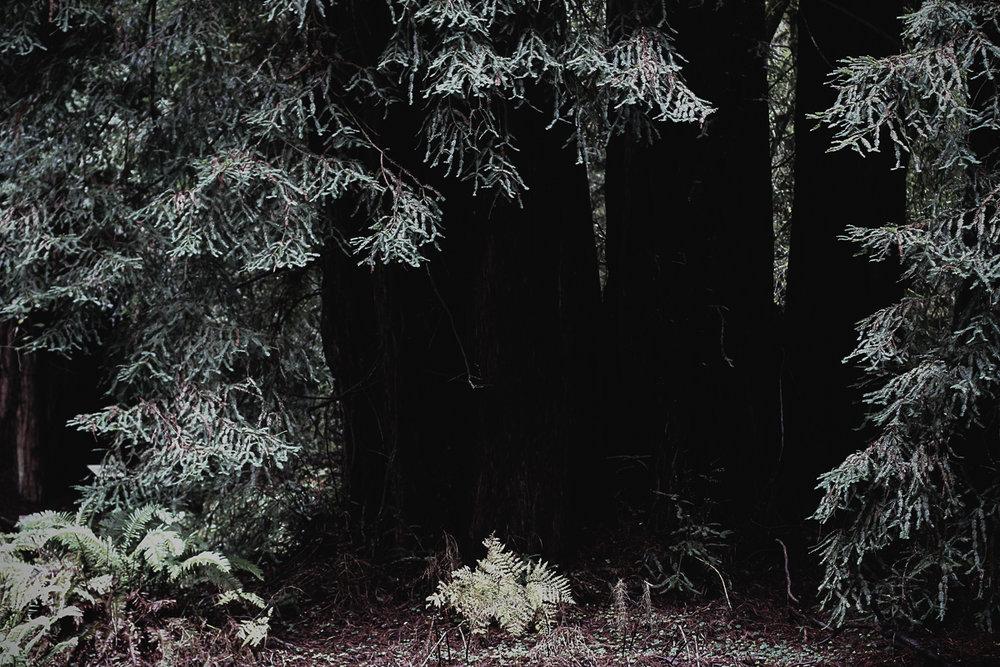 Muir Woods-63.jpg